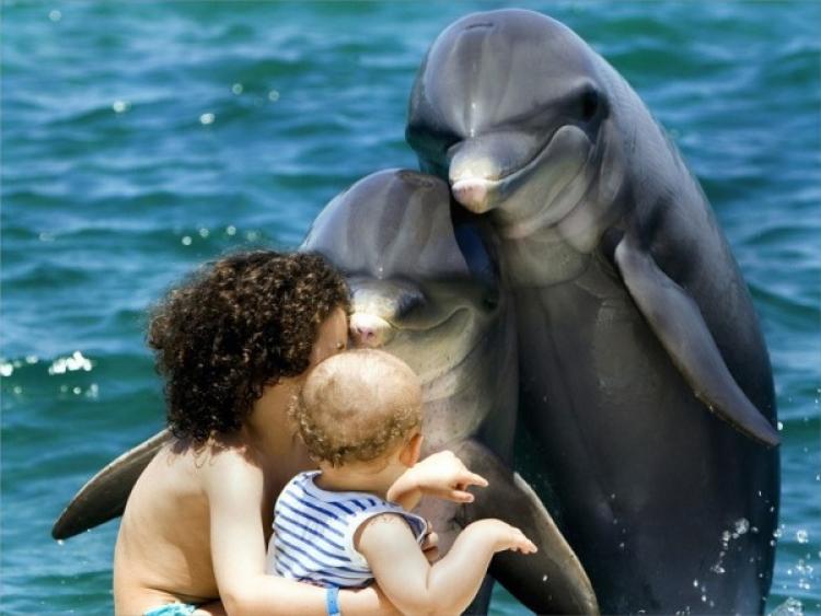 delfin és az emberi látás